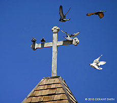 arroyo seco church and pigeons